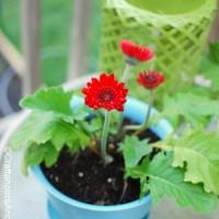 Flower Pot Trick
