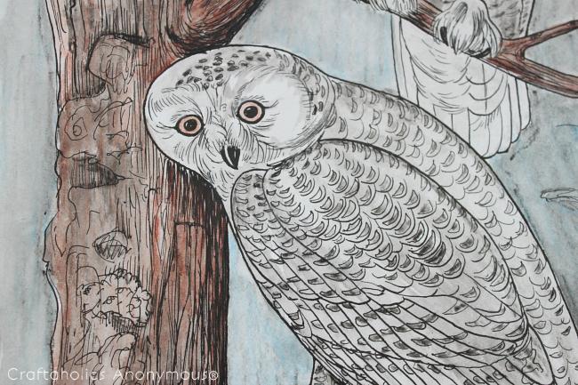 CA-watercolor-owl