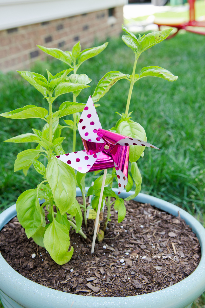 Pinwheel in plants