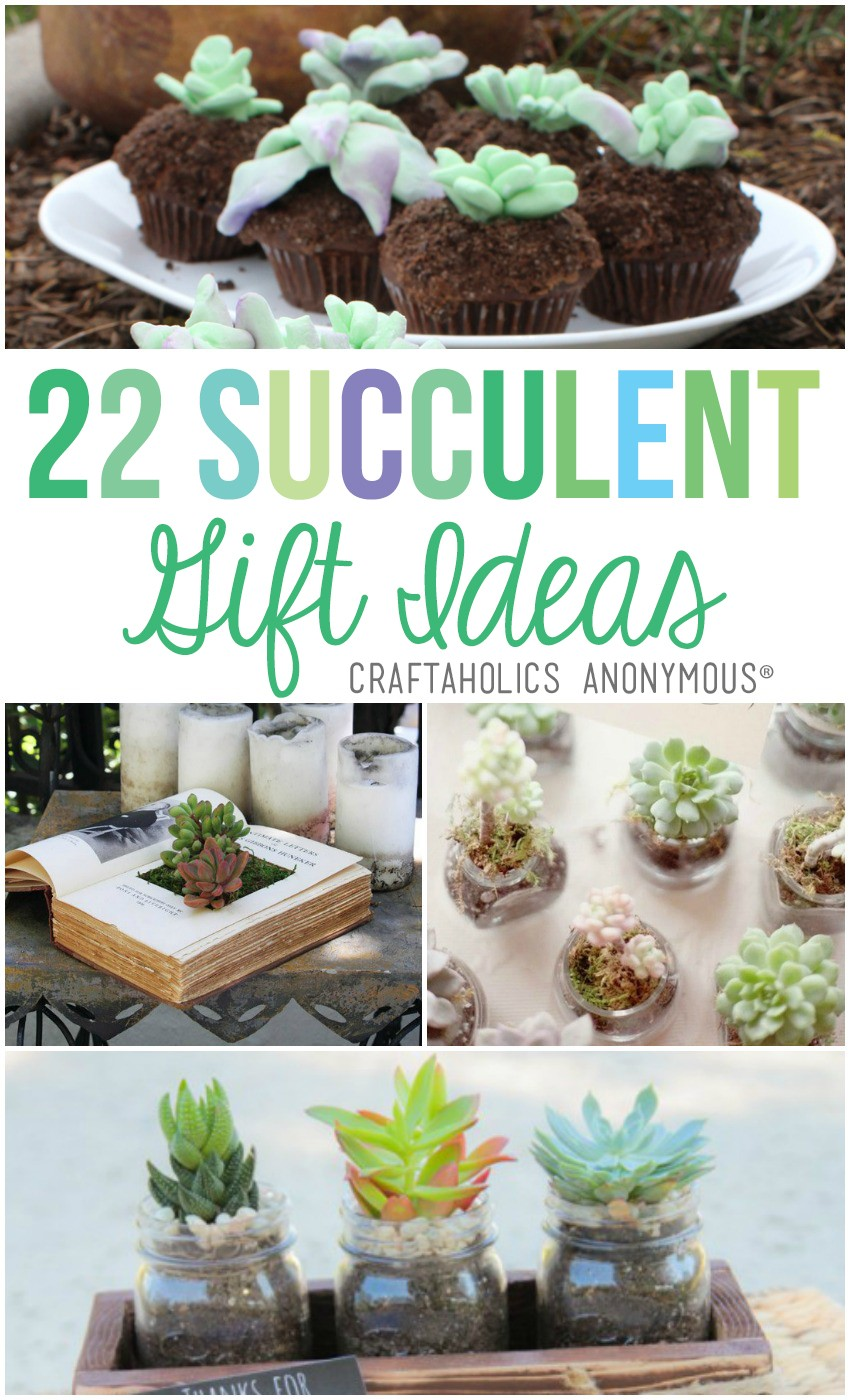 22 Succulent Gift Ideas | Craftaholics Anonymous®