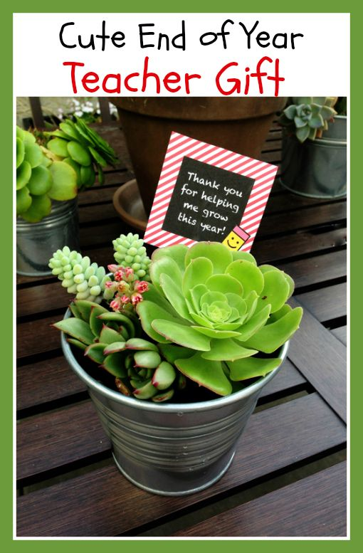 thrifty frugal mom & Craftaholics Anonymous® | 22 Succulent Gift Ideas